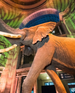 Safari Themed Dinner at Natural History Museum Gets a Thumbs-Up from this Washington DC Event Photographer