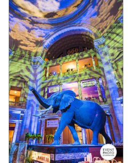 It's a Jungle Out There | DC Event Photographers at Natural History Museum